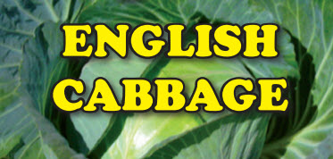Growing English Cabbage for cash.