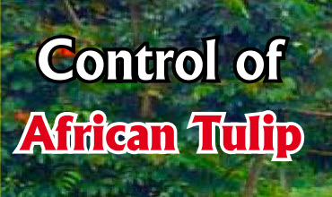 Control of African Tulip