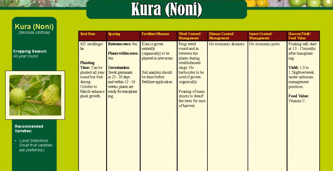 Kura (Noni)