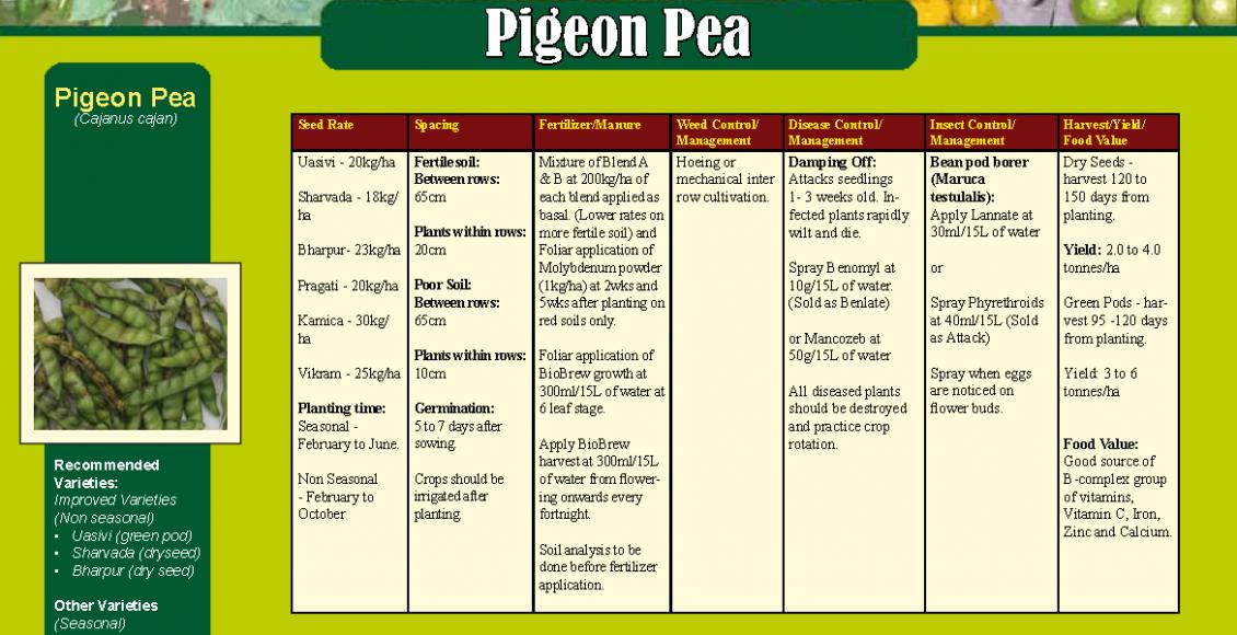 Pigeon Pea