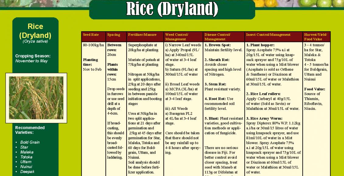 Rice (dryland)