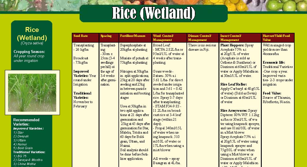 Rice (wetland)