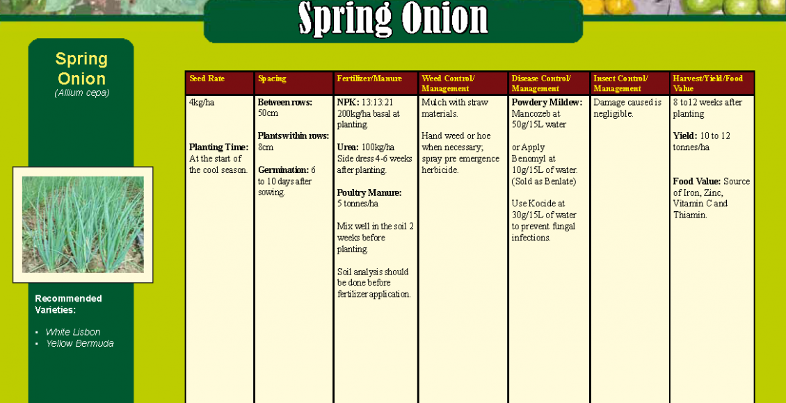 Sprint Onion