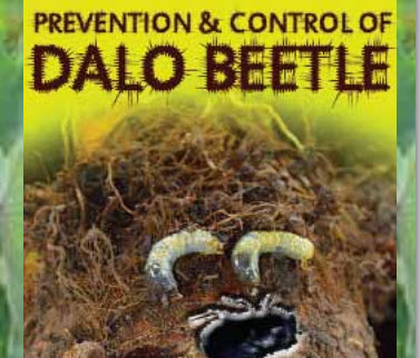 Prevention & Control of Dalo Beetle