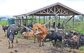 Farm help improves milk production