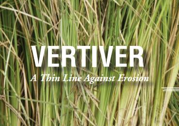 Vertiver soil conservation