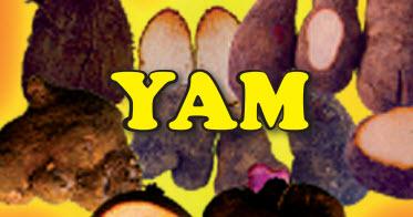 Growing Yams